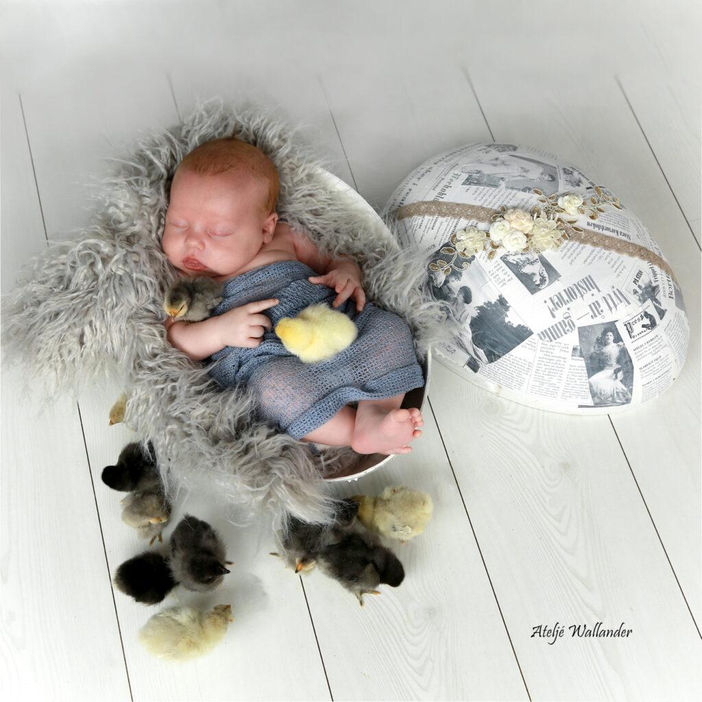 Bebis ligger i stort påskägg med små kycklingar runt..